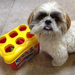 How I taught Cooper to play with a shape sorter